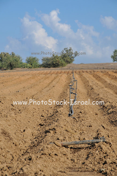 fixed Irrigation sprinklers laid out in a ploughed field. Photographed in Israel