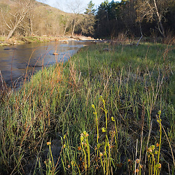 A spring morning on the Ashuelot River in Surry.New Hampshire.  A Connecticut River tributary..