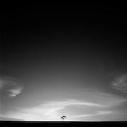 Lone Tree (B&W), Muswellbrook, Hunter Valley, Australia.