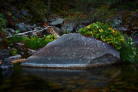 Merced River Meditation. Image taken with a Nikon D3 camera and 24-70 mm f/2.8 lens (ISO 200, 55 mm, f/22, 0.75 sec). Camera mounted on a tripod.