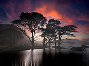 Water rises around trees at Muckross Lake, Killarney Ireland.<br /> #lakesofkillarney<br /> Photo Don MacMonagle