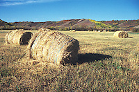 Bales of Straw lie in field, Qu'Appelle Valley, Saskatchewan