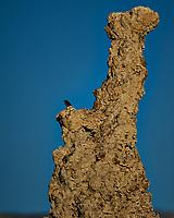 Bird on a Tufa. Mono Lake, South Tufa Area. Image taken with a Nikon D3 camera and 200 mm f/2 lens + 2.0 TCE (ISO 200, 400mm, f/4, 1/3200 sec).