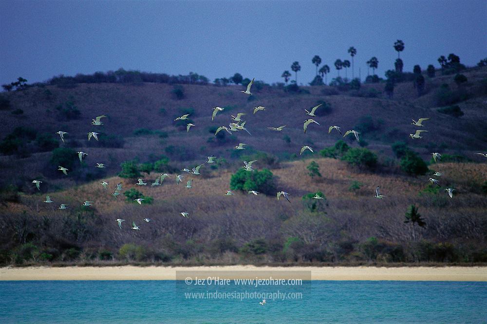 Rinca Island, Komodo National Park, West Manggarai, Flores, East Nusa Tenggara, Indonesia.