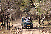 Tour group of eco-tourists in Maruti Suzuki Gypsy King 4x4 vehicle in Ranthambhore National Park, Rajasthan, Northern India