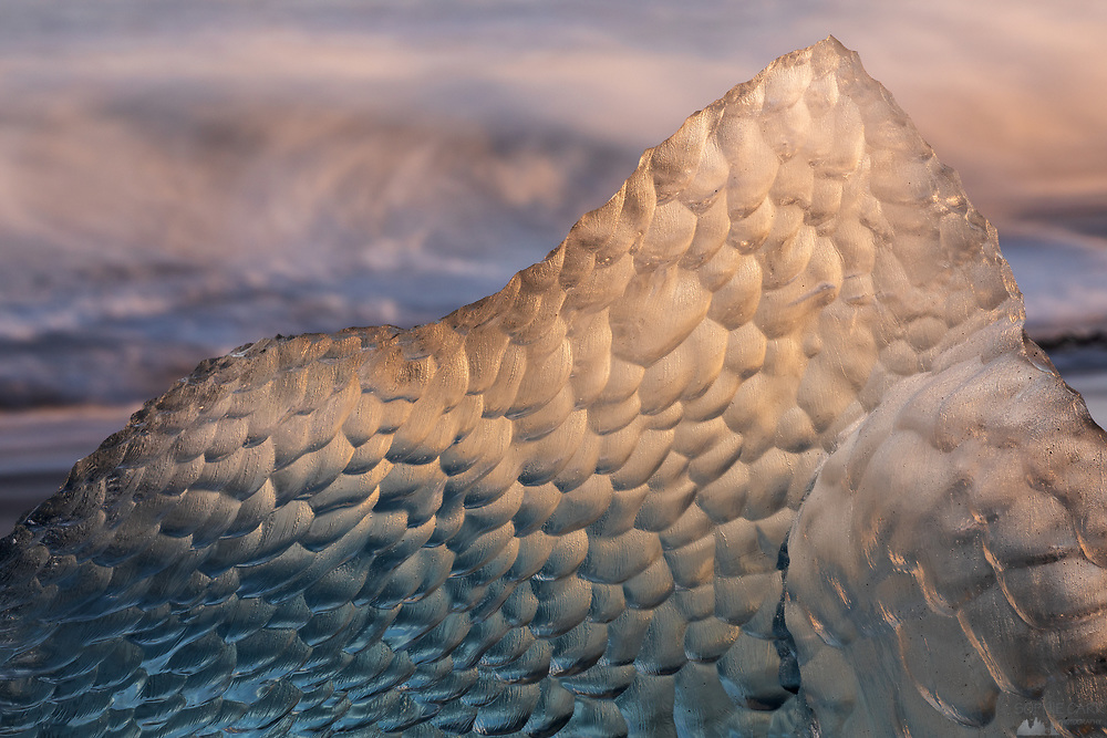 An iceberg glows golden before sunset on Jökulsárlón beach in south-east Iceland, resembling dragon scales.