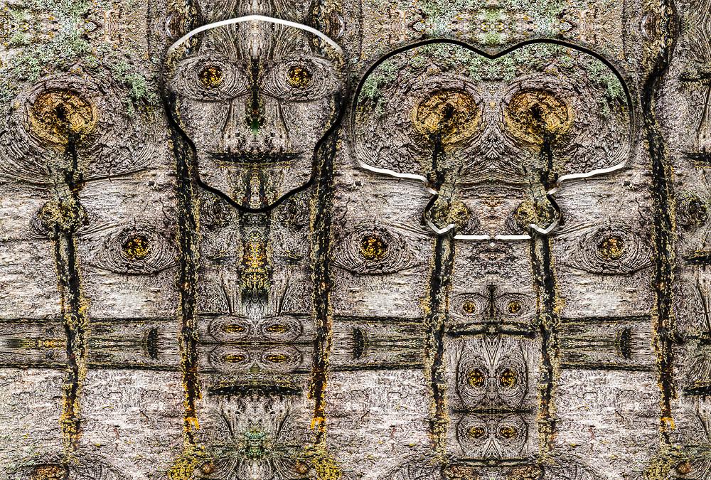 """Skeleton Warriors"", derivative image created from a photo of an evergreen tree, autumn, November, Point Defiance Park, Tacoma, Washinton, USA"