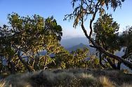 Landschaft mit Baumheide (Erica arborea) im Simien Nationalpark, Debark, Region Amhara, Äthiopien<br /> <br /> Landscape with heather (Erica arborea) in Simien National Park, Debark, Amhara Region, Ethiopia