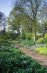 The woodland garden at Beth Chatto's in late April