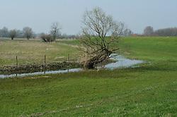 Bloemrijke uiterwaard en rivierdijk bij Zwolle aan de IJssel