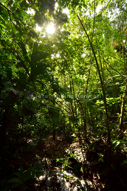 The sun shines through the dense tropical jungle on Barro Colorado Island, home to the Smithsonian Tropical Research Institute, Panama.