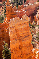 USA, Utah, striking hoodoo land forms at Fairyland view at  Bryce Canyon National Park.