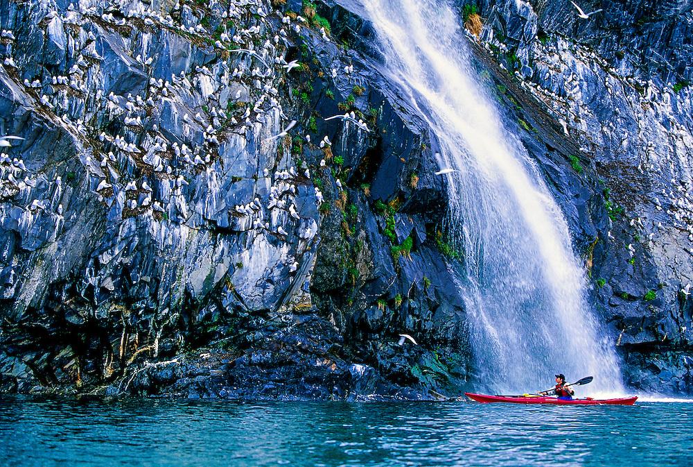 Sea kayaking on Prince William Sound at Whittier, Alaska USA
