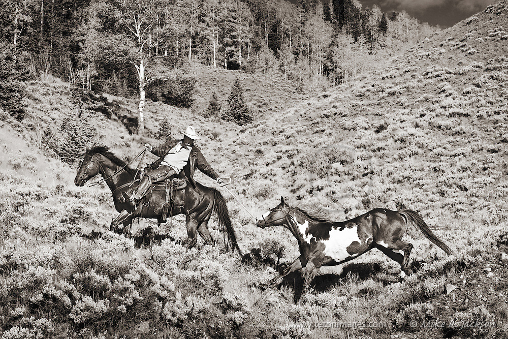 Wranglers and cowboys with horses in the wild west.