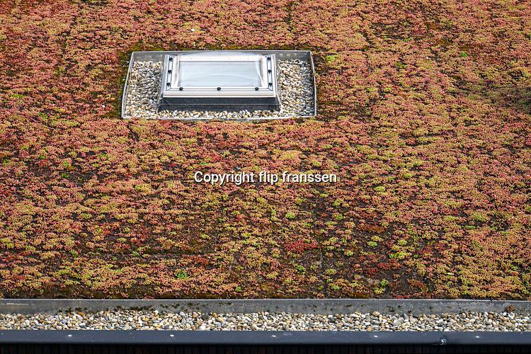 Nederland, Nijmegen, 20-6-2019Het dak van een school heeft een groene, plantaardige bedekking. Dit is een goede isolatie .Foto: Flip Franssen