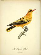 Male Loriodor from the Book Histoire naturelle des oiseaux d'Afrique [Natural History of birds of Africa] Volume 6, by Le Vaillant, Francois, 1753-1824; Publish in Paris by Chez J.J. Fuchs, libraire 1808