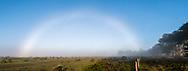 Fogbow at Point Reyes National Seashore, Marin County, California