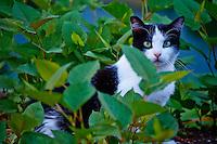 Slovénie, Ljubljana, chat // Slovenia, Ljubljana, Cat