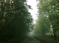 Summer fog.  ©2017 Karen Bobotas Photographer