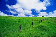Pasture and fence at Parker Ranch, Waimea, The Big Island, Hawaii USA