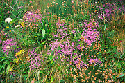 A072JR Rich diversity of plants and wildflowers on coastal hedgerow bank, near the coast Cornwall, England. Image shot 06/2006. Exact date unknown.