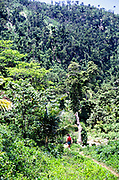 Person walking in tropical landscape rainforest in Blue Mountains, Jamaica, West Indies, 1990