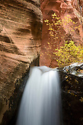 A stream in a small canyon near Zion National Park, Utah.