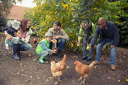 Family and friends feeding apples to chickens in farm, Bavaria, Germany