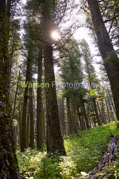 Woodland Summer Magic