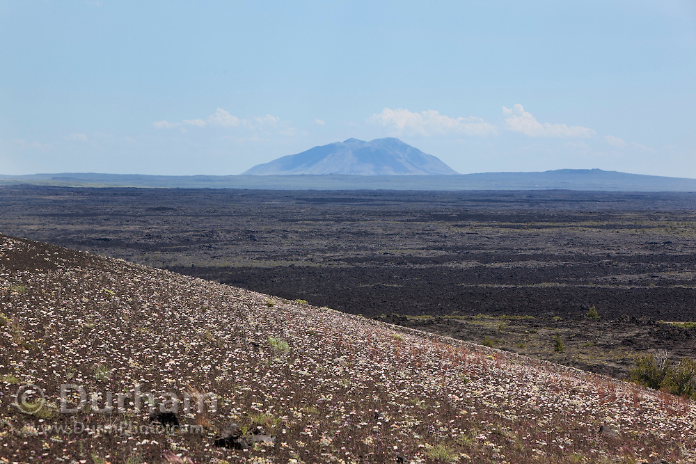 Big Southern Butte in Idaho rises above the lava fileds in Craters of the Moon National Monument, Idaho. A cinder garden is in the foreground.