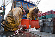 Fishermen, who follow the Marine Stewardship Council (MSC) code of fishing for certified sustainable seafood, sorting their catch out aboard their boat moored on the beach at Hastings, England.