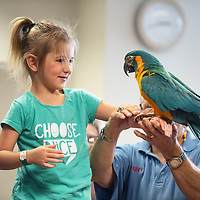 Hope Hellekson, 4, holds Lucille, a blue throated macaw at a presentation by Exotics of the Rainforest at the Octavia Fellin Public Library Children's Branch Wednesday, June 5 in Gallup.