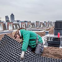 """Nederland, Amsterdam, 21 december 2016.<br /> Op het dak van panden aan de Majubastraat in Amsterdam Oost wordt een groen dak voorziening aangebracht. <br /> <br /> """"Groene daken"""" is een verzamelnaam voor platte- en hellende daken met begroeiing. Die begroeiing kan bestaan uit vetplantjes (sedum), kruiden, mos en/of gras. Maar ook struiken en bomen zijn te gebruiken.<br /> <br /> Foto: Jean-Pierre Jans"""