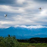 Snowy peaks on Canigou mountain and heron flight.