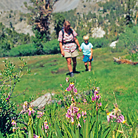 Mother and son hike toward shooting star flowers in meadow, Big Pine Canyon, Sierra Nevada, California.