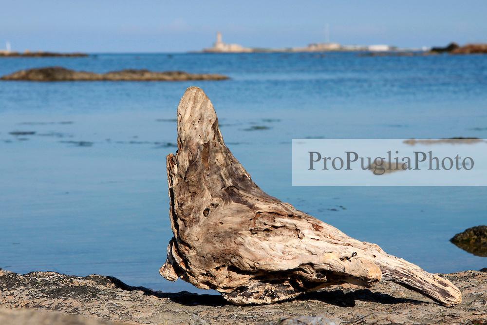24/04/2009 Brindisi Diga di Punta Riso sullo sfondo il faro delle isole delle Pedagne situate nel porto esterno di Brindisi, in primo piano un pezzo di  legno a forma di piccione arenato sugli scogli