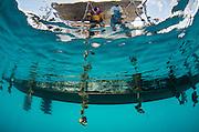 Fiji black pearl farming<br /> Fiji produces various color 'black' pearls<br /> Savusavu island<br /> Fiji. South Pacific<br /> J Hunter Pearl Farm