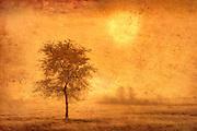 Treein fog at sunrise