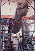 At Stan Winston Studios outside L.A. in Van Nuys, CA., the dinosaurs, like this T.Rex for Steven Spielberg's action epic, Jurassic Park are created.  Stan is one of Hollywoods most innovative character creators.