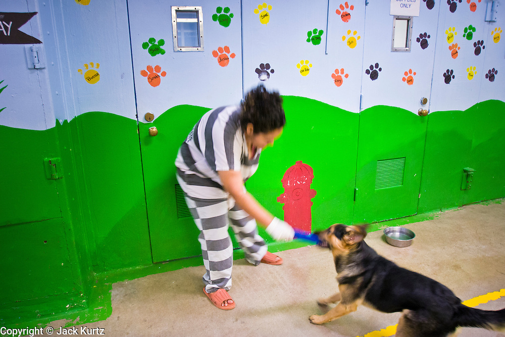 18 JULY 2005 - PHOENIX, AZ, USA: A woman inmate in the Maricopa County Jail, plays with a German Shepherd puppy at the Maricopa Animal Safe Hospice (MASH) an animal shelter created by Maricopa County Sheriff Joe Arpaio. Arpaio created the no kill shelter in 2000 and staffs it with women inmates from the county jail system. Most of the 60 dogs and 32 cats in the shelter were rescued from abusive homes. The animals are available for adoption to homes in Maricopa County. The shelter is housed in an old jail next to the county courthouse. Working in the shelter is considered a plum assignment by inmates and there is a waiting list to be assigned to the shelter.  In 2011, the US Department of Justice issued a report highly critical of the Maricopa County Sheriff's Department and the jails. The DOJ said the Sheriff's Dept. engages in widespread discrimination against Latinos during traffic stops and immigration enforcement, violates the rights of Spanish speaking prisoners in the jails and retaliates against the Sheriff's political opponents.    PHOTO BY JACK KURTZ