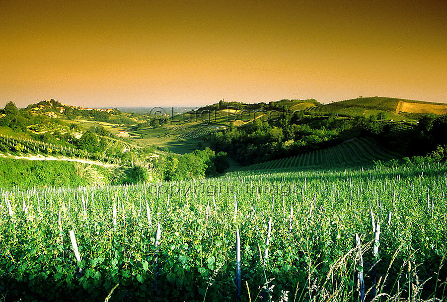 Enologia, Enology, Vino, Wine.