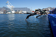 The swim section of the elite ladies race at the Discovery Triathlon World Cup Cape Town 2017. Image by Greg Beadle