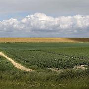 Nederland Walsoorden   gemeente Hulst  19 juni 2010 20100619       ..Serie landschappen provincie Zeeland. Zeeuws-Vlaanderen, landschap polderlandschap scenery met op de achtergrond de dijk van de westerschelde. Zonnenstralen op de dijk, lichtspel.  wisselvallig veranderlijk weer. Op de voorgrond een landbouw perceel, telen van aardappelen.    Illustratief beeld  waterveiligheid. , schoon, schoonheid, sea level, sealevel, skies, sloot, space, sprankelend, sprankelende, stijging zeespiegel, stil, stilleven, stilte, stock, stockbeeld, streek, sunny, sustainable, terrein, typerend, typical dutch landscape, typisch hollands, typisch hollands landschap, typische, uitgestrektheid, uitzicht, uniek, unieke, veiligheid, veld, vergezicht, vergezichten, verte, vrij, vrijheid weer, waaien, water level, waterbeheer, Waterbeheerplan, watergang, waterhuishouding, waterkering, waterkeringen, Waterkeringen, waterlevel, watermanagement, waterniveau, waterpeil, waterplan, waterproblematiek, waterstaatkundige, waterstand, watersysteem, waterveiligheid, waterveiligheid en gebiedsontwikkeling, waterwerken, weersomstandigheden, wei, weide, weidegang, weiland, weiland. Landscape, wijdheid, wijds, wijdsheid, wind, wit, witte, wolk, wolken, wolkenpartij, zeeland, zeeuws vlaanderen, zeeuws-vlaanderen, zeewering, zo vrij als een vogel, zonnig, zonnige dag, zware, zwitserleven gevoel .Foto: David Rozing