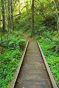 Boardwalk through lush forest on the trail to Falls Creek Falls, Umpqua National Forest, Oregon