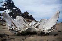 Whale bone washed ashore on Bunes Beach, Moskenesoy, Lofoten Islands, Norway