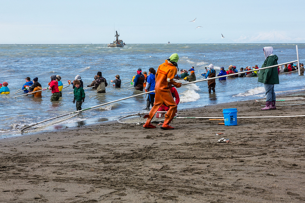 Alaska.  A fisherman dressed in a bright orange survival suit pulls a sockeye (red) salmon from the water with a long-handled dipnet in July along the north beach at the mouth of the Kenai River.  In the background, two fishing boats work their way into Cook Inlet.  The short dipnetting personal use fishery is immensely popular as thousands of visitors swell the local population of the town and surrounding area.