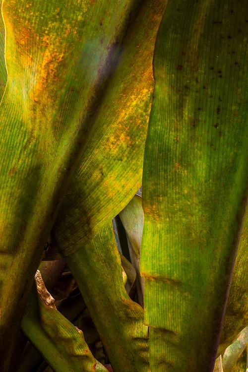 Tropical plant details, Puna, Hawaii, #TheBigIsland, USA
