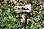 A small wooden sign, surrounded by salal (Gaultheria shallon), points the way to an overland trail navigating an impassable headland along Third Beach, Olympic National Park, Washington.