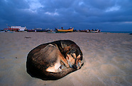 FEATURE: The Stray Dogs of the Beach