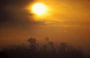 Sunrise at Kinabantang River, showing edge of rainforest and early mist, Sabah, Borneo, soft orange colours